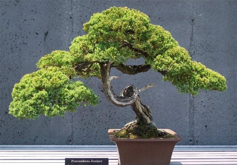 واردات گیاهان زینتی از چین ممنوع شد