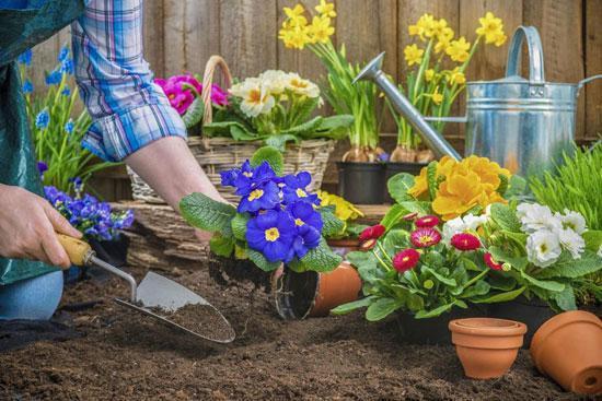 باغچه های زمستانی را به استقبال بهار ببریم
