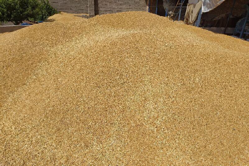 خبرنگاران فرماندار: خروج گندم از هشترود قاچاق محسوب می شود