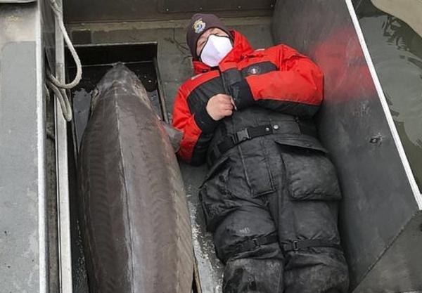 صید ماهی خاویار عظیم با عمر 100 سال در آمریکا!