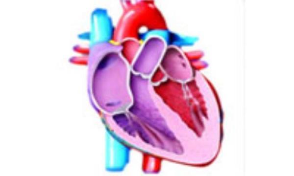 عوامل خطر بیماری های عروق قلب
